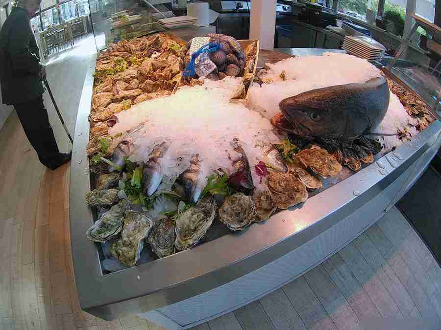 Vemos unos pescados sobre hielo, con ostras.